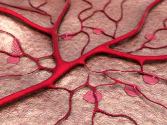 Blood vessel formation