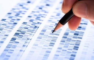 Scientist analyzing DNA gel- Sanford Burnham Prebys