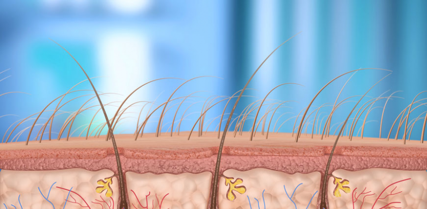 Illustration of a hair follicle