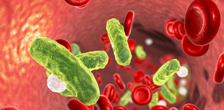 Sepsis bacteria in blood